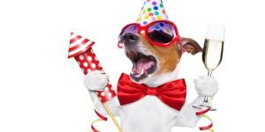 o-DOG-FIREWORKS-facebook